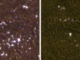 Stages in the seasonal disappearance of surface ice from the ground around the Phoenix Mars Lander are visible in these images taken on Feb. 8, 2010, (left) and Feb. 25, 2010, during springtime on northern Mars.