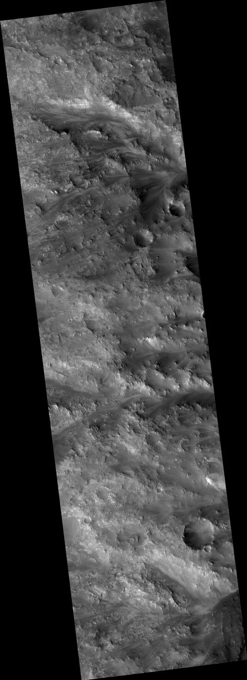 Syrtis Major Region