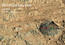 see the image 'Martian Rock and Dust Filling Studied with Laser and Camera'