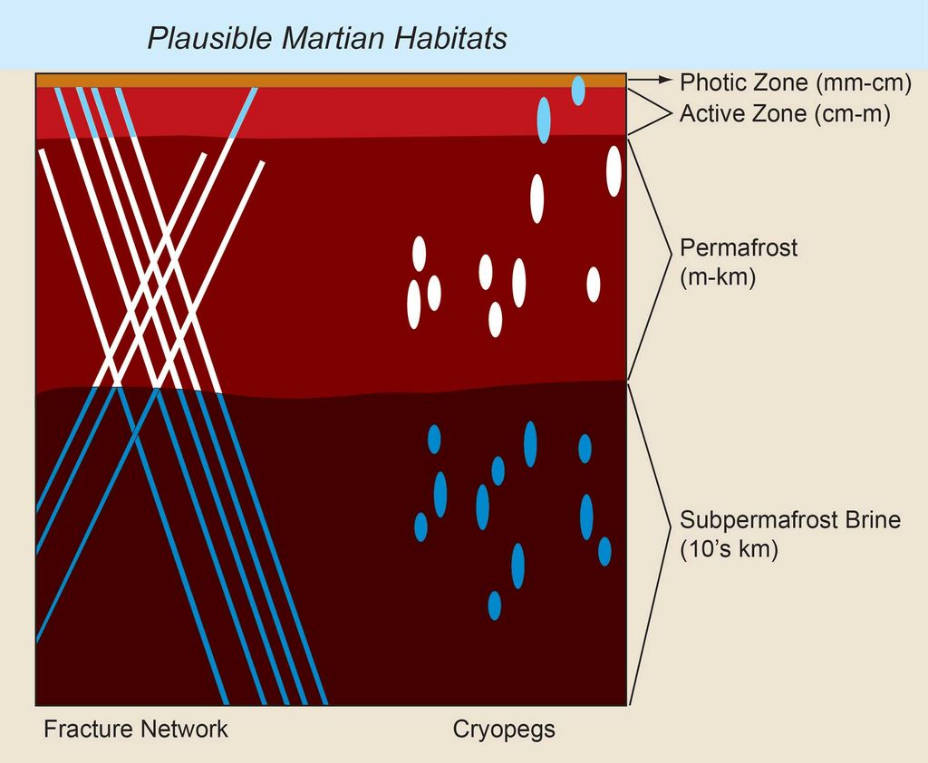 Unfrozen brine in cryopegs and fracture networks provides habitats for the survival and growth of organisms both within and under frozen rocky materials on Earth and, by analogy, could provide habitats on Mars.