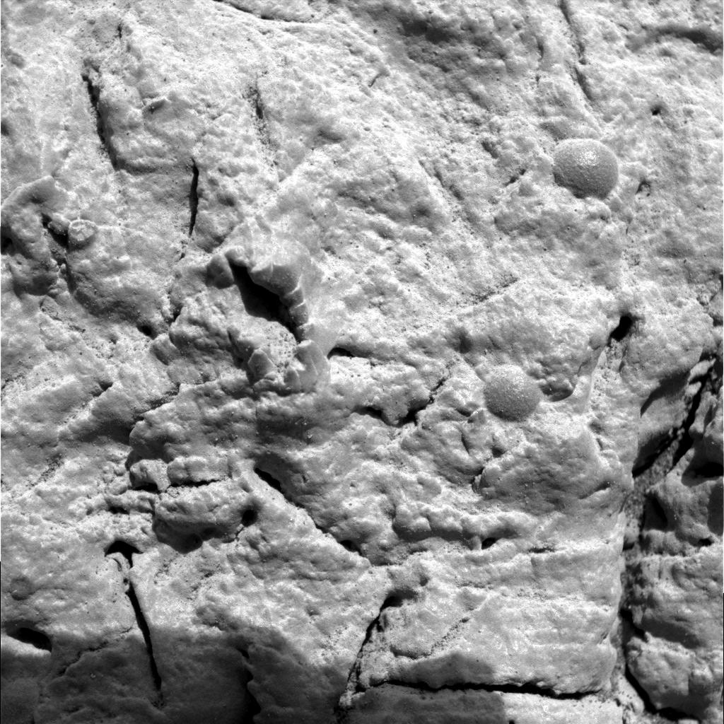Insect Fossils on Mars Article on Mars Fossils by m