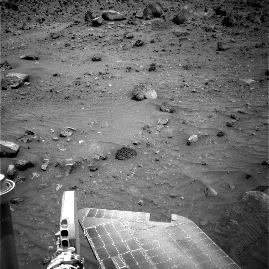Animal Life On Mars