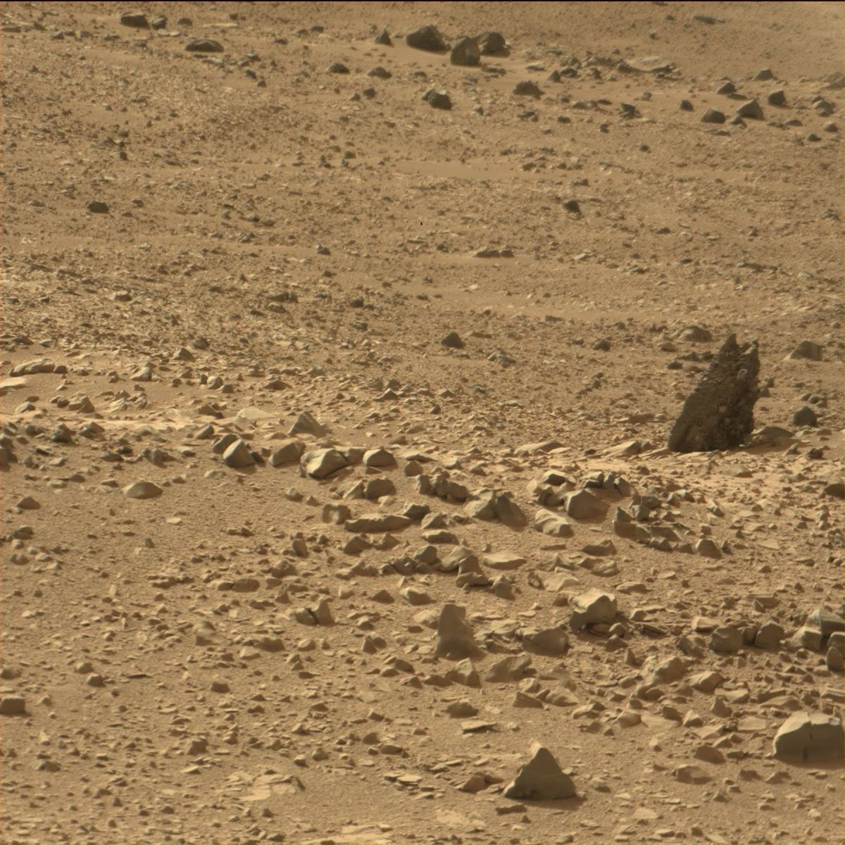 nasa pictures of life on mars - photo #29