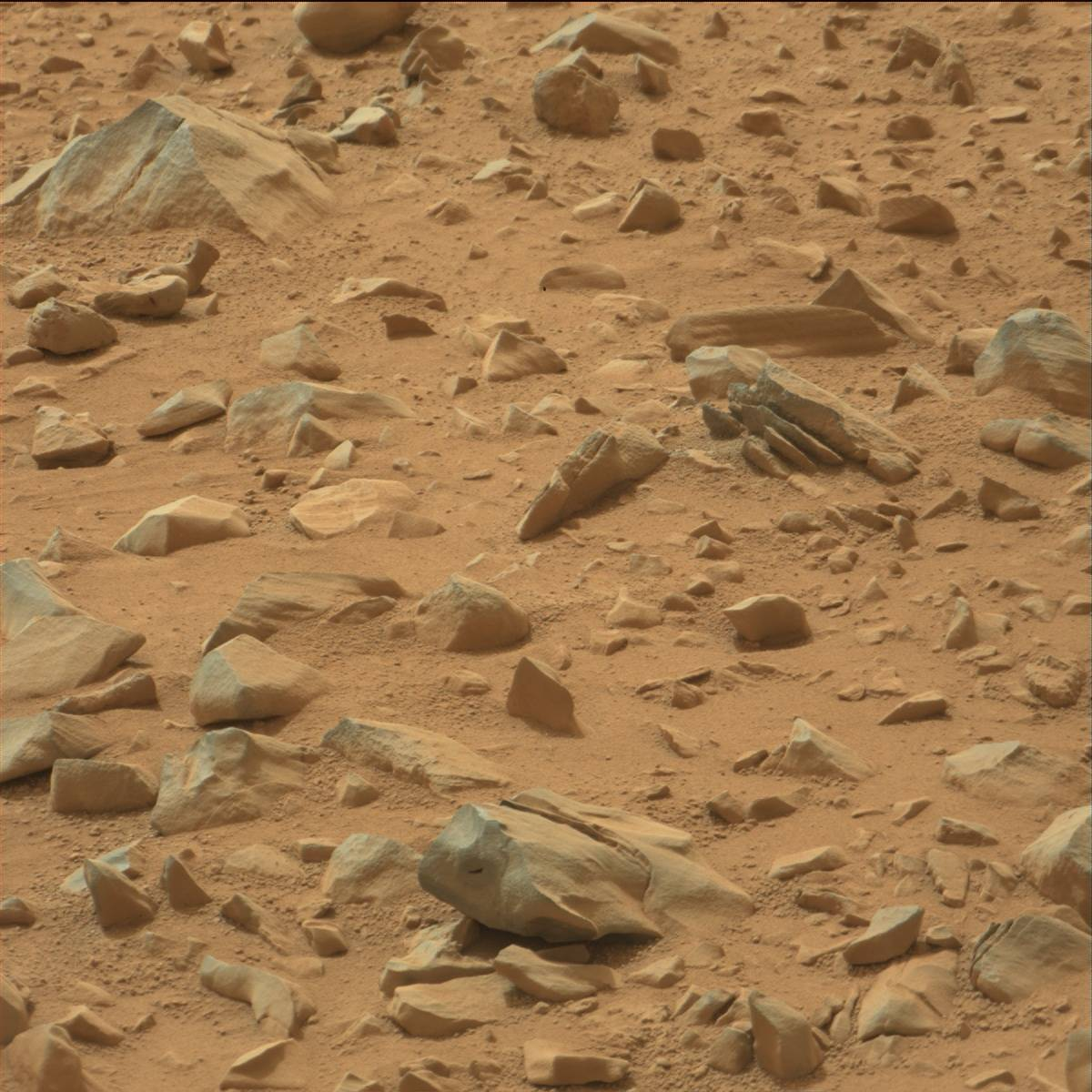 mars rover finds animal - photo #24