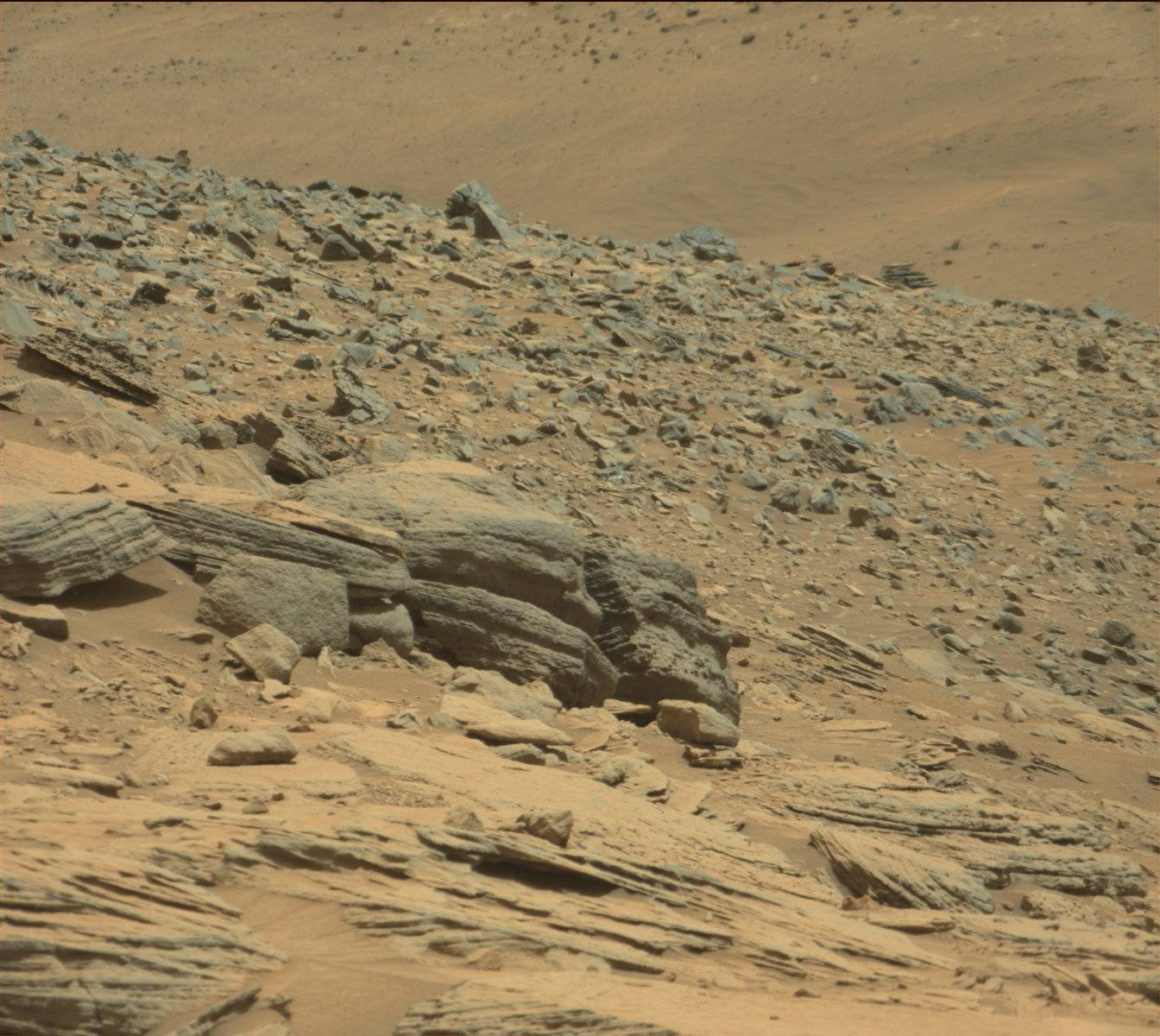 mars rover finds animal - photo #19