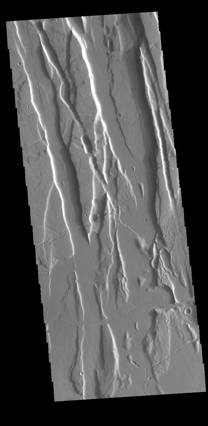 This image from NASAs Mars Odyssey shows part of Cerunius Fossae. The linear depressions are fault bounded features called graben.