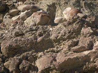 Stromatolites in the Nevada Desert