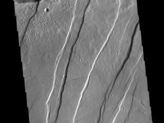 Alba Mons Tectonics