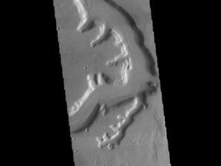 This image from NASAs Mars Odyssey shows a section of Mamers Valles. The channel is nearly 1000 km long (600 miles).